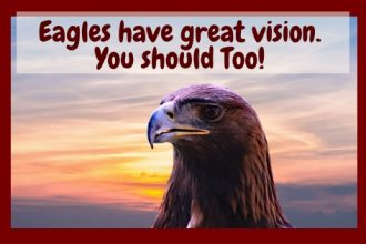Eagle with vision