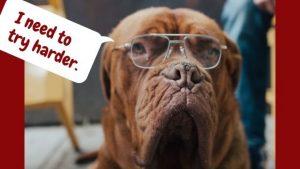 Funny dog J.W.