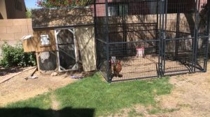 Chicken coup, hen enclosure